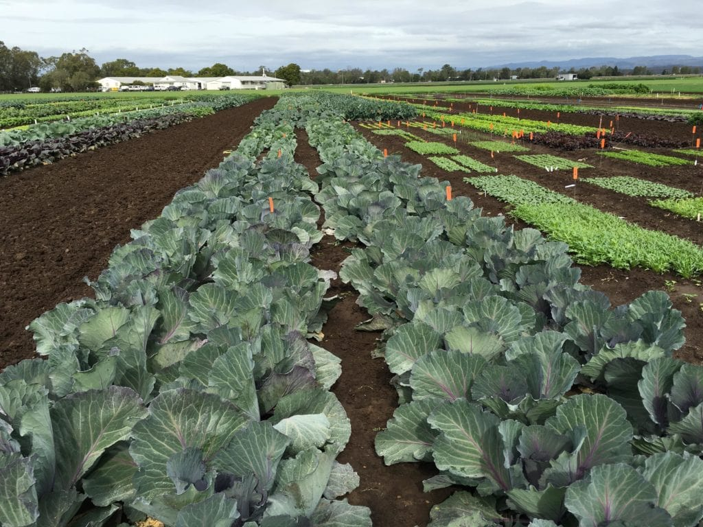 Using fertilizers in vegetable causes the pollution of ground water-min